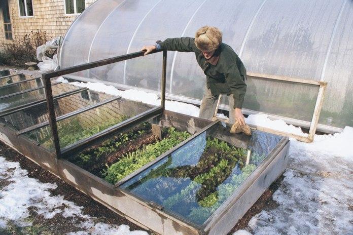 kg04-cold-frame-gardening-01